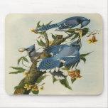 Los arrendajos azules de Audubon Tapete De Ratones