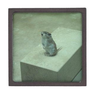 ¡Los aullidos del ratón del asesino (leucogaster d Caja De Joyas De Calidad
