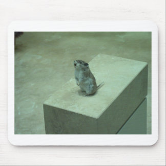 ¡Los aullidos del ratón del asesino leucogaster d Alfombrilla De Raton
