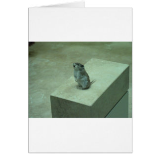 ¡Los aullidos del ratón del asesino (leucogaster d Felicitacion