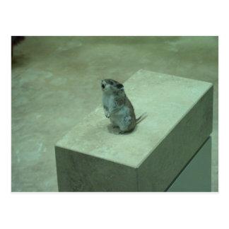 ¡Los aullidos del ratón del asesino (leucogaster d Tarjeta Postal