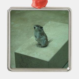 ¡Los aullidos del ratón del asesino (leucogaster Adorno Cuadrado Plateado