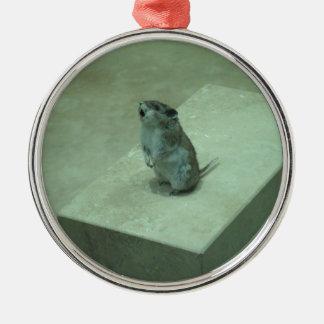 ¡Los aullidos del ratón del asesino (leucogaster Adorno Redondo Plateado