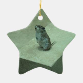 ¡Los aullidos del ratón del asesino (leucogaster Adorno De Cerámica En Forma De Estrella
