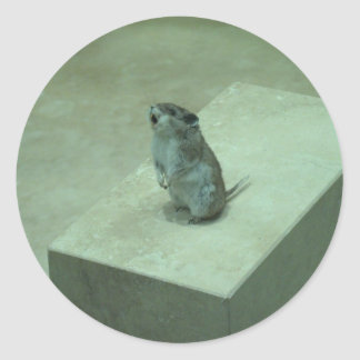¡Los aullidos del ratón del asesino (leucogaster Pegatina Redonda
