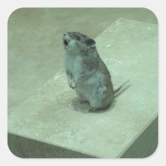 ¡Los aullidos del ratón del asesino (leucogaster Pegatina Cuadrada