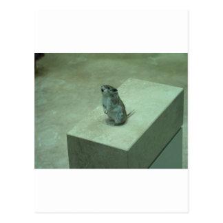 ¡Los aullidos del ratón del asesino (leucogaster Postal
