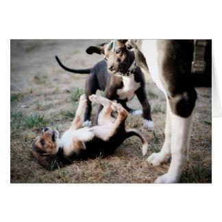 Los beagles pueden ser chicos duros tarjeta de felicitación