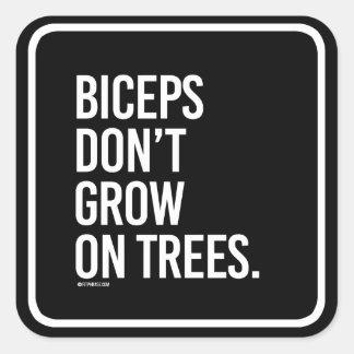 Los bíceps no crecen en los árboles -   aptitud pegatina cuadrada