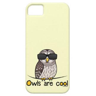 Los búhos son frescos iPhone 5 cárcasas