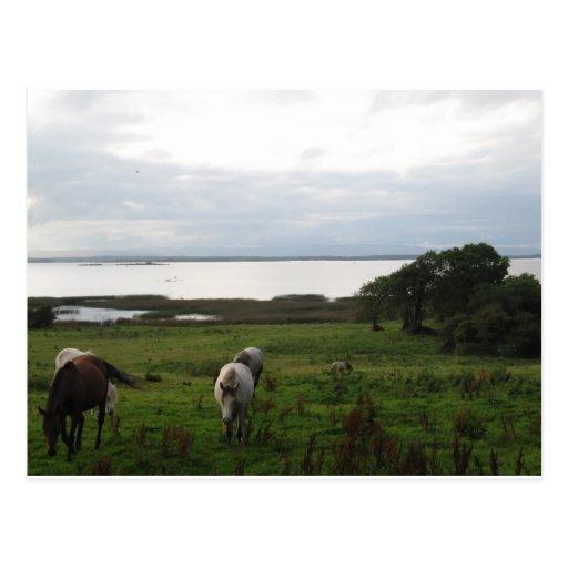 Los caballos acercan a un lago postal