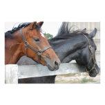 Los caballos del amor papeleria