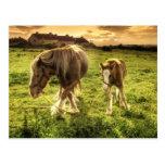 Los caballos miman y paren tarjetas postales