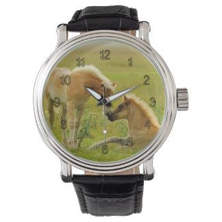 Los caballos paren en campo relojes de pulsera
