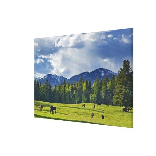 Los caballos pastan en pasto cerca del pescado bla impresión en lienzo estirada