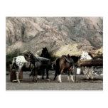 los caballos postal