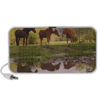 Los caballos reflejaron en la pequeña corriente, e mp3 altavoz