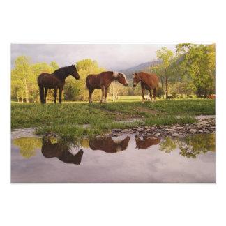 Los caballos reflejaron en la pequeña corriente, e fotografía
