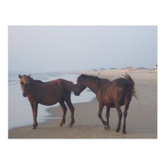 Los caballos salvajes de la playa de Carova Postales