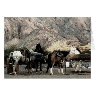 los caballos tarjeta pequeña