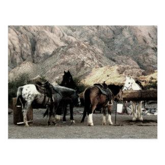 los caballos tarjeta postal