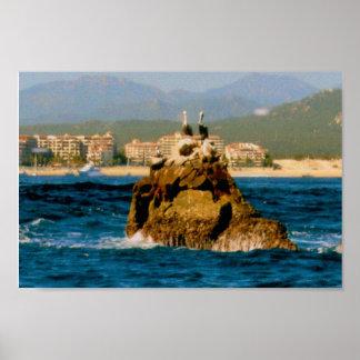 Los Cabos Pelicans on Rock Formations Poster