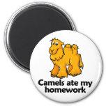 Los camellos comieron mi preparación imán de frigorifico