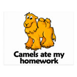 Los camellos comieron mi preparación postal