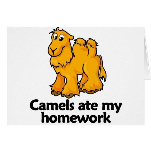 Los camellos comieron mi preparación felicitaciones