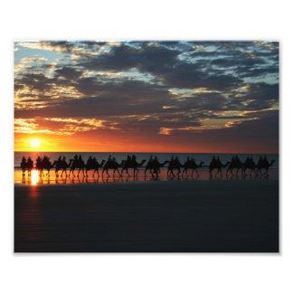 Los camellos del cable varan, Broome, Australia 10 Cojinete