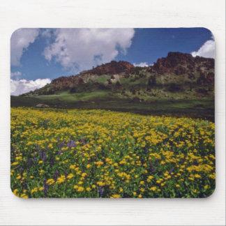 Los campos de flor cerca del Sonora pasan, Califor Tapetes De Ratones