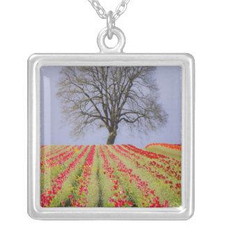 Los campos del tulipán y un roble solitario colgante cuadrado