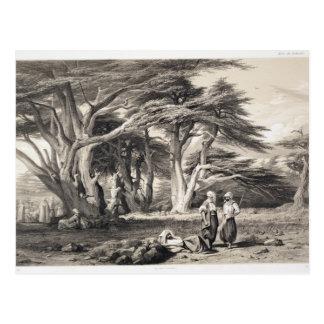 Los cedros de Líbano grabados por Freeman sepia Tarjetas Postales