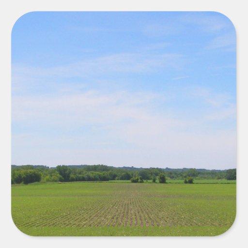 Los cielos azules de las tierras de labrantío calcomanía cuadradase