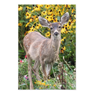 Los ciervos adulan en jardín de flores cojinete