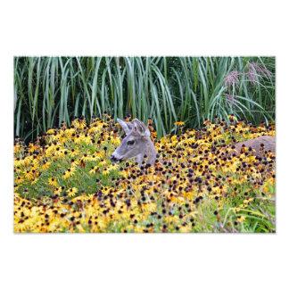 Los ciervos adulan en jardín de flores fotografía