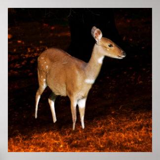 Los ciervos arrojan el Bushbuck Impresiones