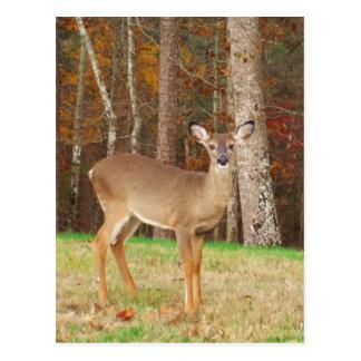Los ciervos ideales de un cazador tarjeta postal