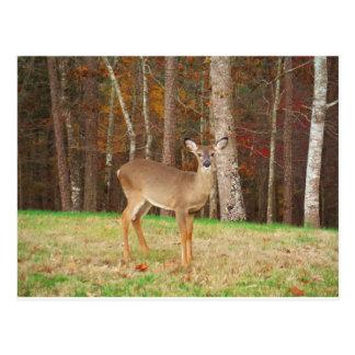 Los ciervos ideales de un cazador tarjetas postales