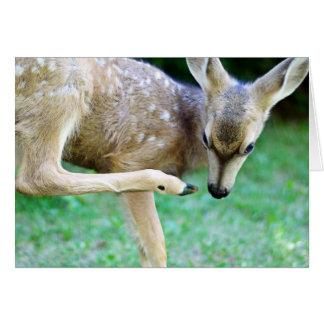 Los ciervos - rasguñe ese picor tarjeta de felicitación