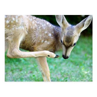 Los ciervos - rasguñe ese picor tarjeta postal