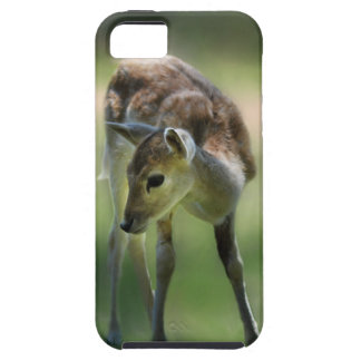 Los ciervos son tan dulces iPhone 5 carcasas