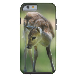 Los ciervos son tan dulces funda de iPhone 6 tough