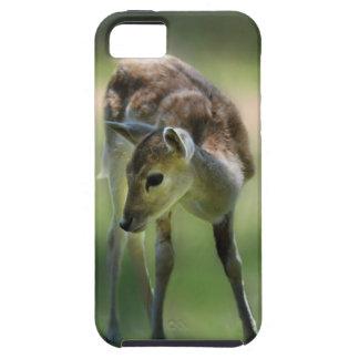Los ciervos son tan dulces funda para iPhone SE/5/5s