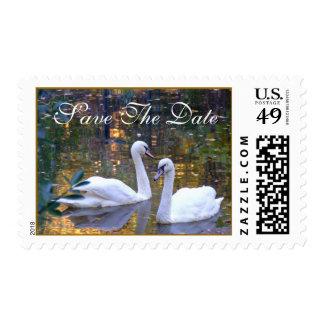 Los cisnes blancos ahorran los sellos de la fecha