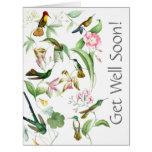 Los colibríes consiguen a pozo pronto todos tarjeton