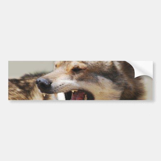 Los colmillos del lobo pegatina para auto