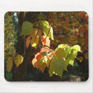 Los colores del otoño Mousepad