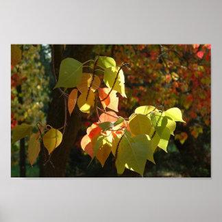 Los colores del otoño poster