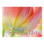 Los colores del tulipán de la primavera ahorran la